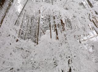 英彦山の雪景色 (国道500号) 楽しみましたよ~