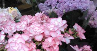 紫陽花の季節になりました!中津おススメ案件のご紹介です!女性活躍中のオシゴトです!!