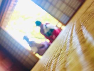 今はいけない(泣)京都での花見旅行 コロナ収束したらまた行きたいな~