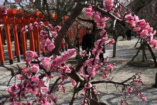 JR椎田駅から徒歩で約10分の所にある綱敷天満宮へ梅を見に行きました🌺