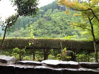 大分県玖珠郡//ホタルの飛び交う温泉地として知られている『宝泉寺温泉』へ行ってきました