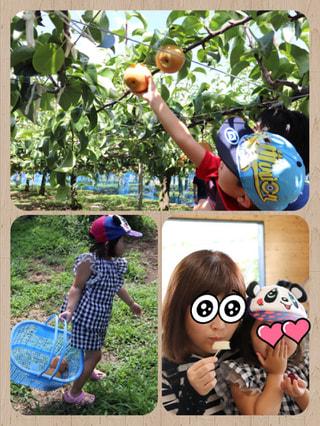うきはのフルーツば食べにきんしゃい!という言葉に惹かれて梨狩りに行ってきました!