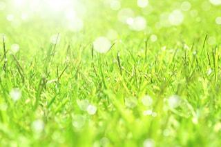 春の嵐は、どこかやさしい。一足先に春の雰囲気を味わいましょう(^^♪