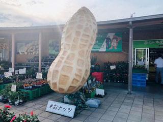 """千葉県名産""""おナッツ""""がある木更津うまくたの里と新着お仕事!"""